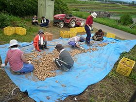 畑作業の写真